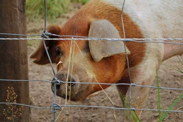 5 Gründe weniger tierische Produkte zu konsumieren